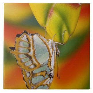 Sammamish, Washington Tropical Butterfly 7 Tile