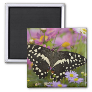 Sammamish, Washington Tropical Butterfly 8 2 Inch Square Magnet