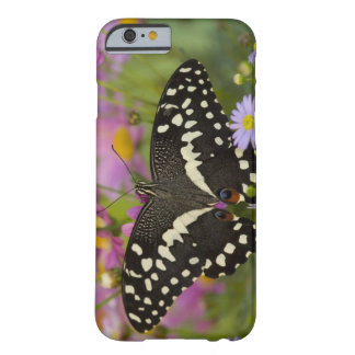 Sammamish, Washington Tropical Butterfly 8 Barely There iPhone 6 Case