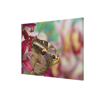 Sammamish, Washington Tropical Butterfly 8 Canvas Print