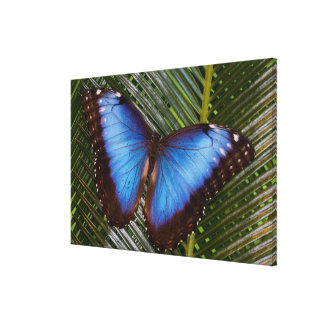 Sammamish Washington Tropical Butterfly 8 Canvas Print