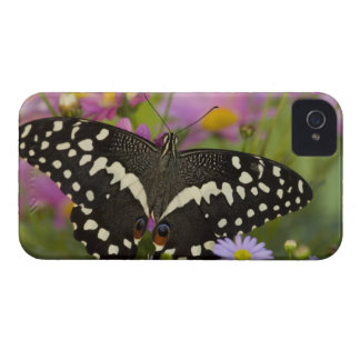 Sammamish, Washington Tropical Butterfly 8 Case-Mate iPhone 4 Case