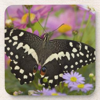 Sammamish, Washington Tropical Butterfly 8 Beverage Coasters