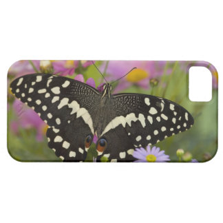 Sammamish, Washington Tropical Butterfly 8 iPhone SE/5/5s Case
