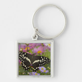 Sammamish, Washington Tropical Butterfly 8 Keychain