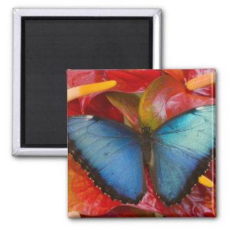 Sammamish Washington Tropical Butterfly 8 Fridge Magnets