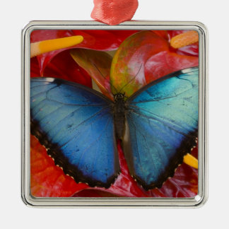Sammamish Washington Tropical Butterfly 8 Christmas Ornaments
