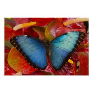 Sammamish Washington Tropical Butterfly 8 Poster