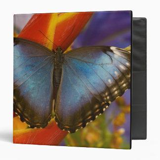 Sammamish Washington Tropical Butterfly 9 Binder
