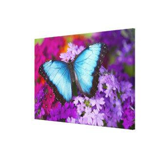 Sammamish Washington Tropical Butterfly 9 Canvas Print