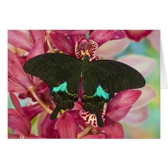 Sammamish, Washington Tropical Butterfly 9 Card