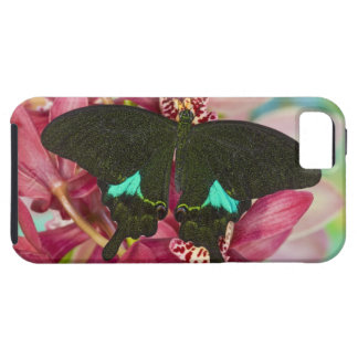Sammamish, Washington Tropical Butterfly 9 iPhone SE/5/5s Case