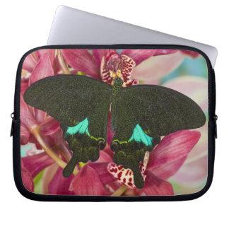 Sammamish, Washington Tropical Butterfly 9 Laptop Computer Sleeve