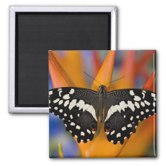 Sammamish, Washington Tropical Butterfly 9 Magnet