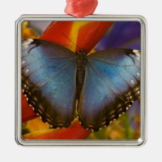 Sammamish Washington Tropical Butterfly 9 Christmas Tree Ornaments