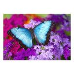 Sammamish Washington Tropical Butterfly 9 Photo Print
