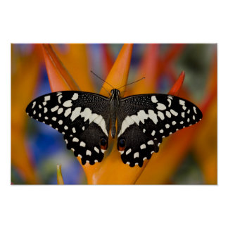 Sammamish, Washington Tropical Butterfly 9 Poster
