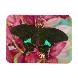 Sammamish, Washington Tropical Butterfly 9 Rectangular Photo Magnet