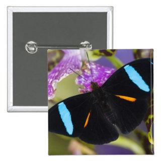 Sammamish, Washington Tropical Butterfly Button