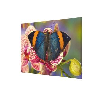Sammamish Washington Tropical Butterfly Canvas Print