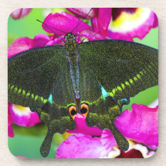 Sammamish, Washington Tropical Butterfly Beverage Coasters