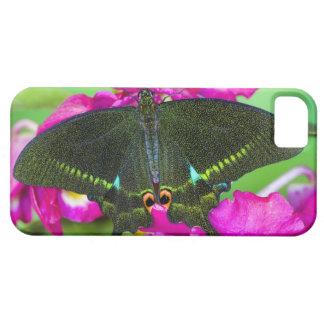 Sammamish, Washington Tropical Butterfly iPhone SE/5/5s Case