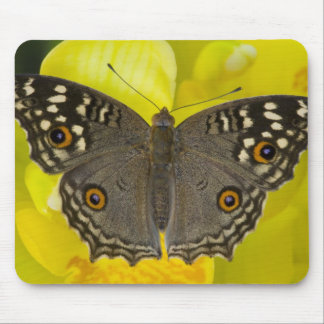 Sammamish Washington Tropical Butterfly Mouse Pads