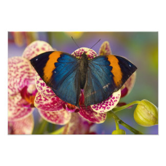 Sammamish Washington Tropical Butterfly Photo Print