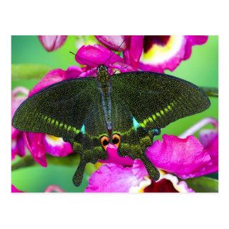 Sammamish, Washington Tropical Butterfly Postcard