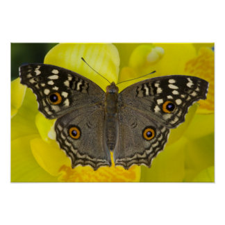 Sammamish Washington Tropical Butterfly Poster