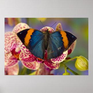 Sammamish Washington Tropical Butterfly Print