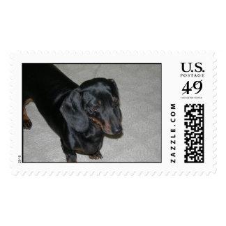Sammi girl stamp