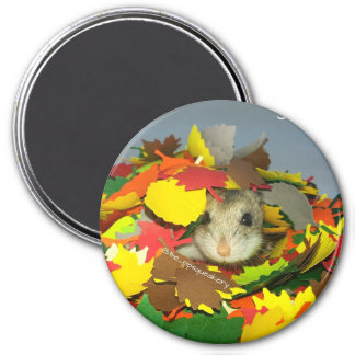 Sammi is Hiding From You! 3 Inch Round Magnet