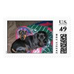 Sammi & Pretzel napping Stamps