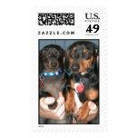 Sammi & Pretzel standing Postage Stamps