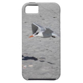 Sammy Seagull iPhone SE/5/5s Case