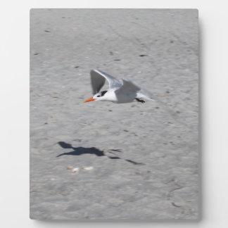 Sammy Seagull Plaque