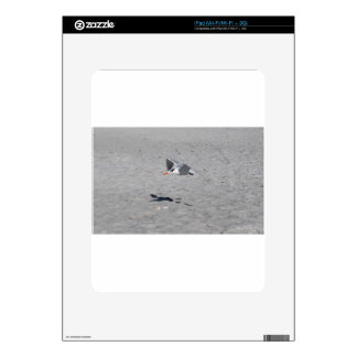 Sammy Seagull Skin For The iPad