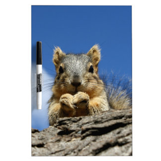 Sammy Squirrel and the Blue Sky Dry Erase Board