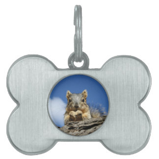 Sammy Squirrel and the Blue Sky Pet Tag