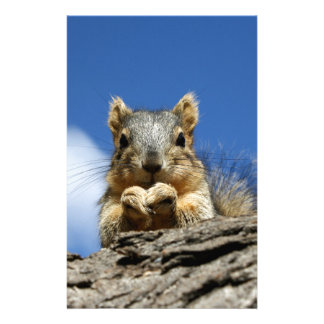 Sammy Squirrel and the Blue Sky Stationery