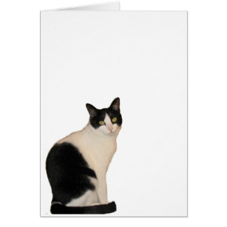 Sammy the Cat Greeting Cards