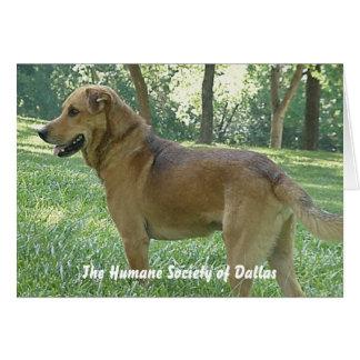 Sammy - The Humane Society of Dallas Greeting Card