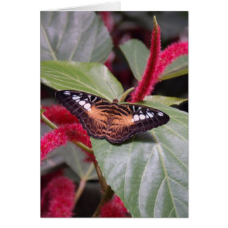 Samon Butterfly Greeting Card