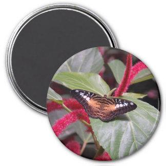 Samon Butterfly 3 Inch Round Magnet