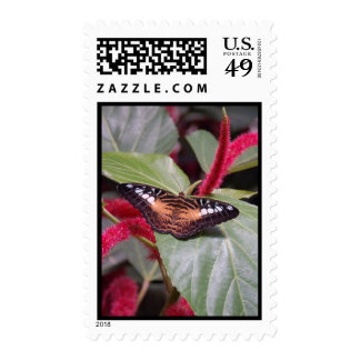 Samon Butterfly Stamps