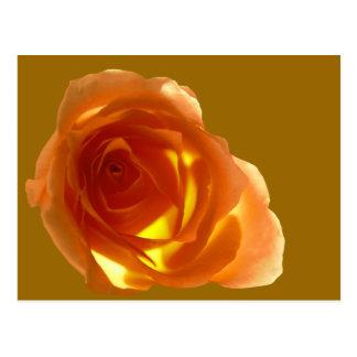 Samon Rose Postcard