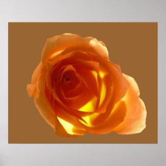 Samon Rose Poster