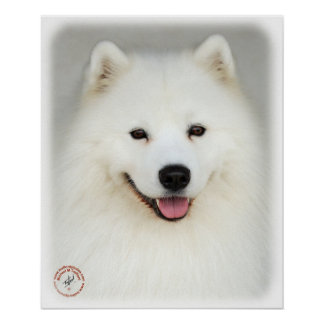 Samoyed 9Y566D-019 Poster