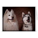 Samoyed and Husky Greeting Card